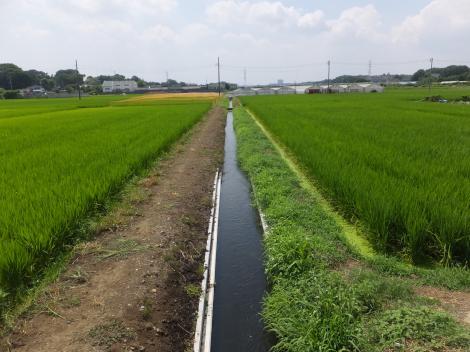 境川高飯堰用水路