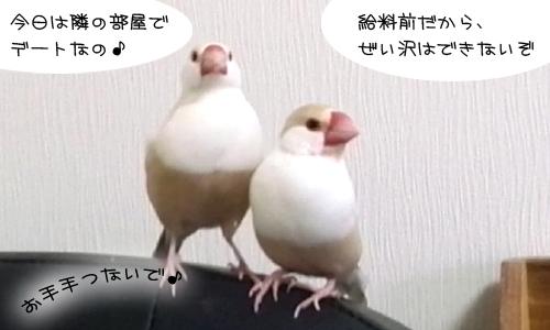 シェルの幸せ_1