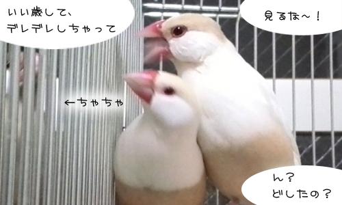 シェルの幸せ_6