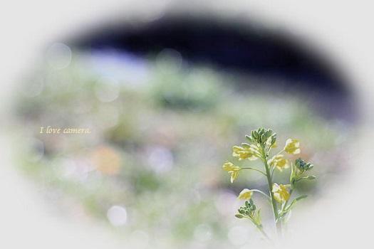 kako-JesEig4hIW8Jh9Ij菜の花