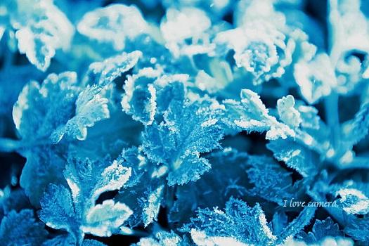 kako-GpyqotxBrTWReEjz霜に覆われた葉っぱ