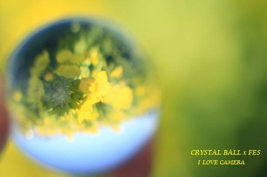 IMG_2015_03_02_9999_9菜の花