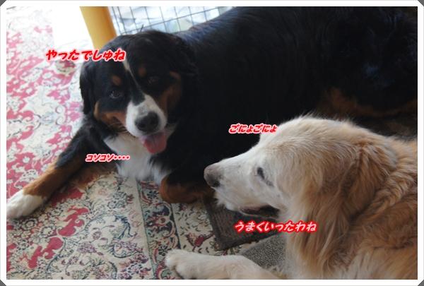 2015-8ナイショ話