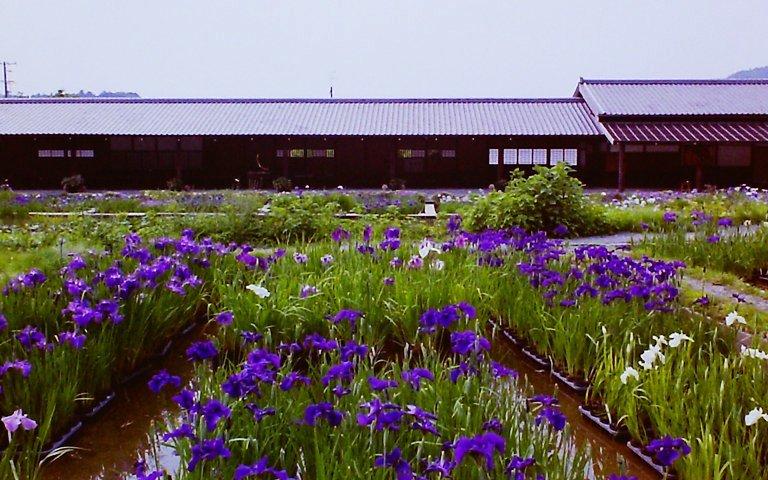2015 加茂荘-2