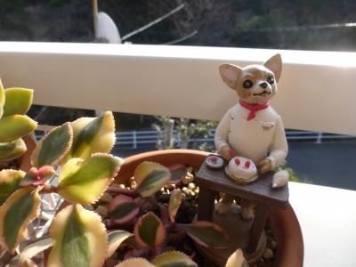 サルメントーサと チワワ人形 2015 1・11