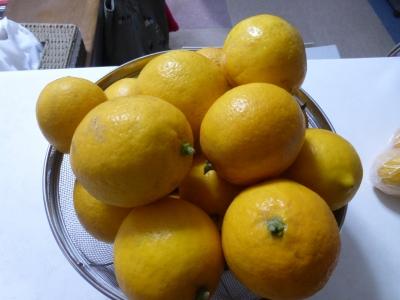 収穫したレモン 2015 2・4