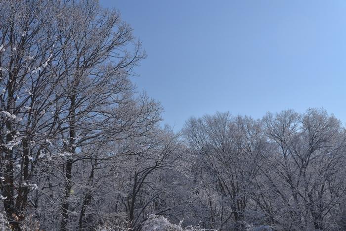 大欅とクヌギの雪26