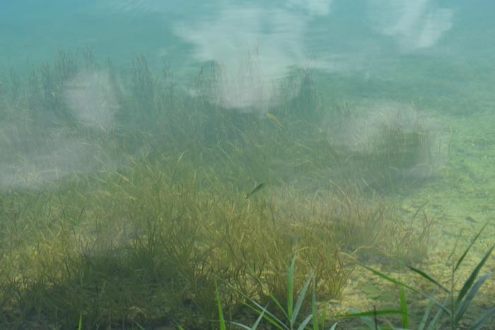 透明な水に泳ぐ魚21