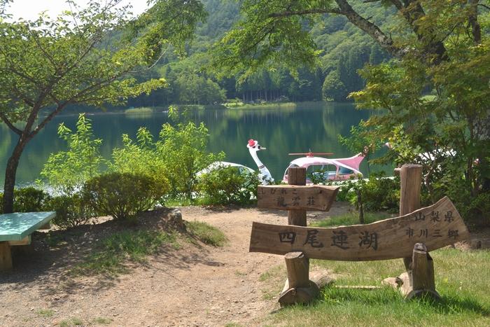 四尾連湖と白鳥27