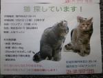 CHIRASHI2