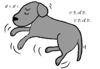 夢を見る犬