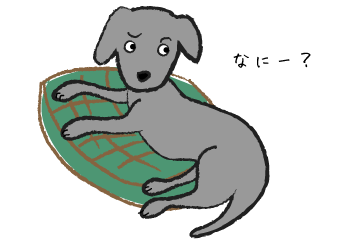 ふりかえる犬