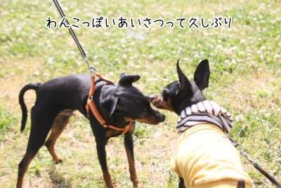 2015_05_06_9999_72.jpg