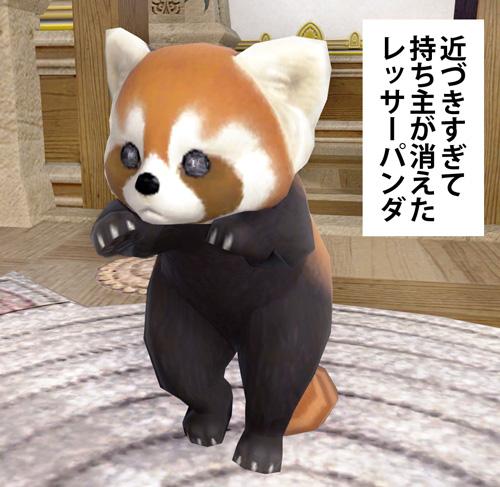浮いてるレッサーパンダ