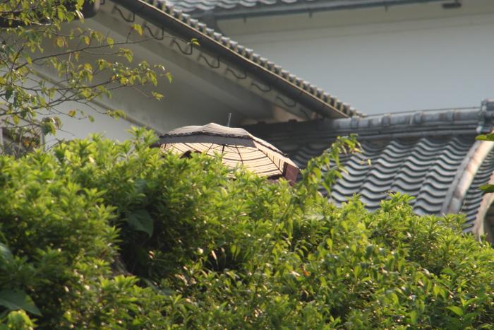 150802-meiji-42.jpg