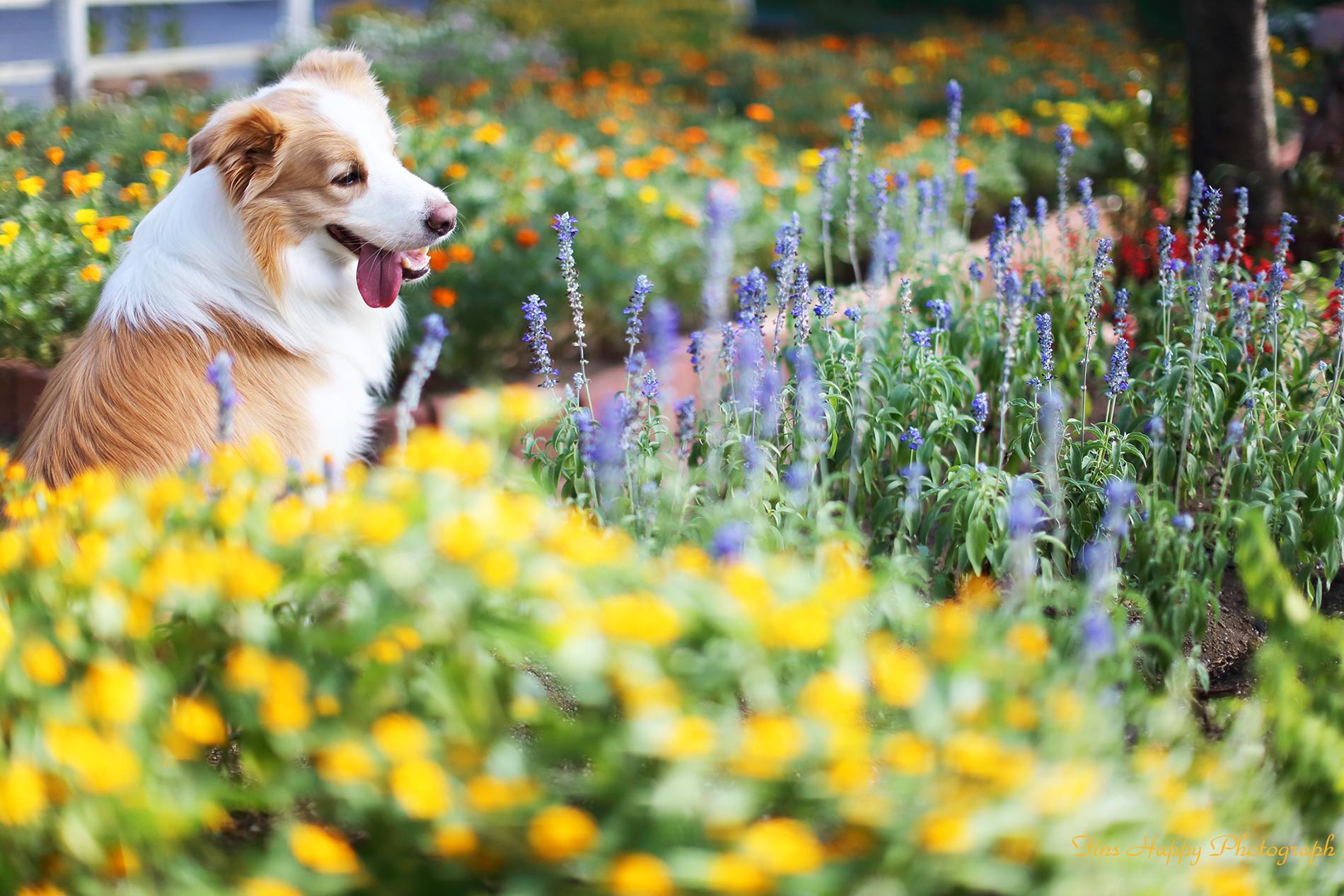 夏の盛りの花装い