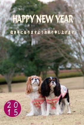 fc2blog_20150106125841311.jpg