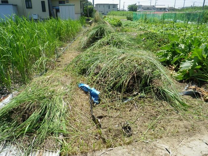 草刈2_15_08_01