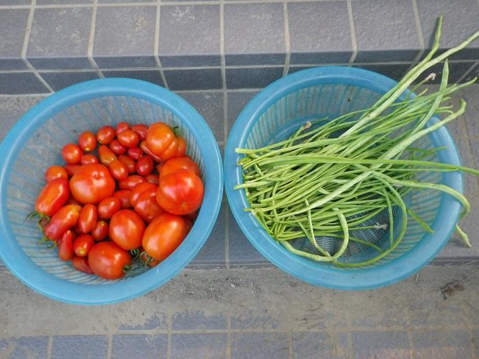 収穫2_15_08_05