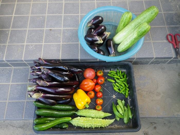 収穫1_15_08_05
