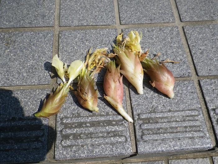収穫2_15_08_08