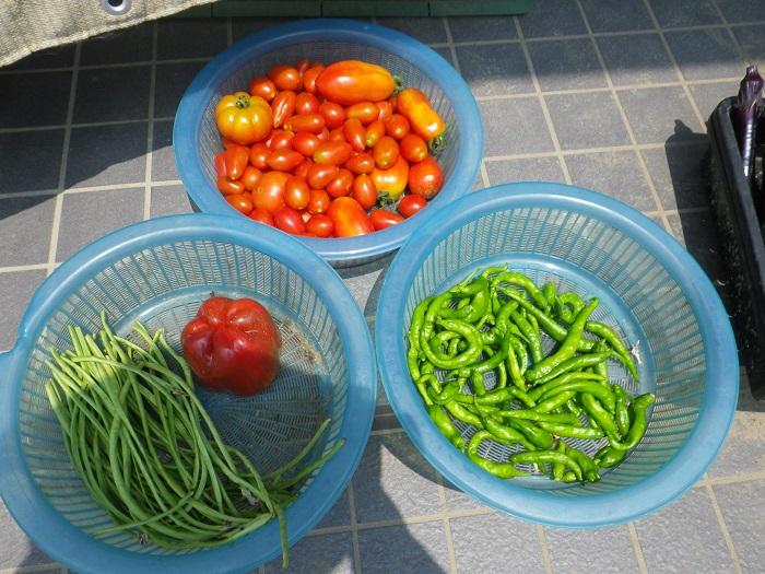 収穫4_15_08_08