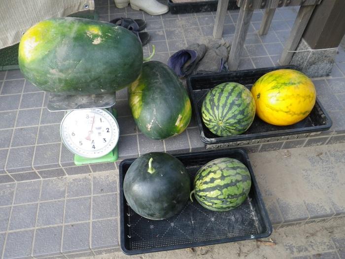 収穫6_15_08_08