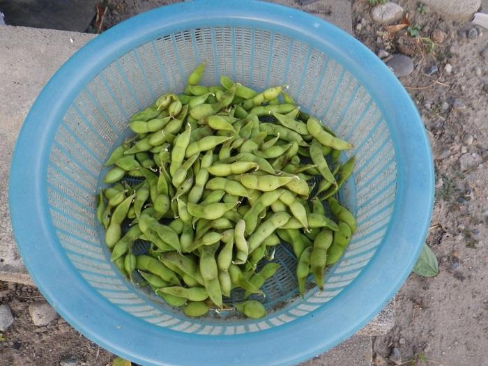 収穫7_15_08_08