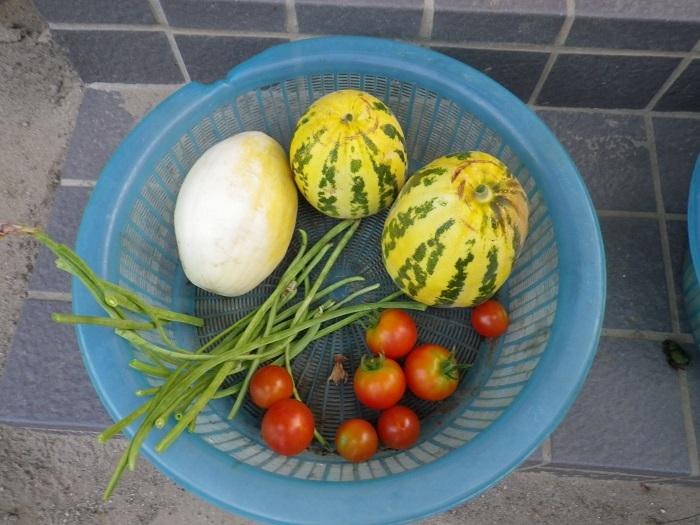 収穫2_15_08_10
