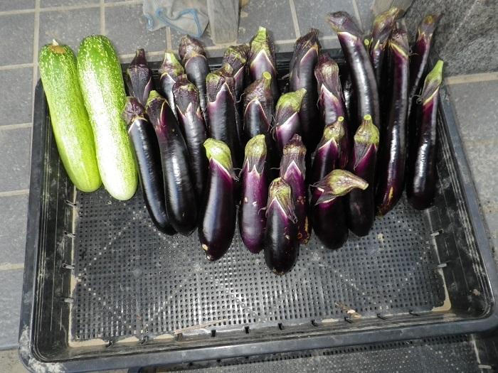 収穫2_15_08_12