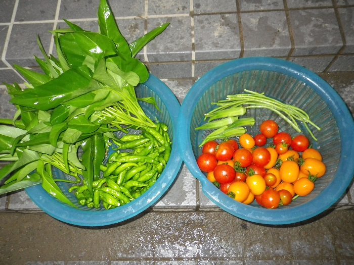 収穫1_15_08_13