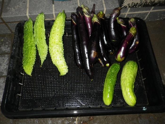 収穫2_15_08_13