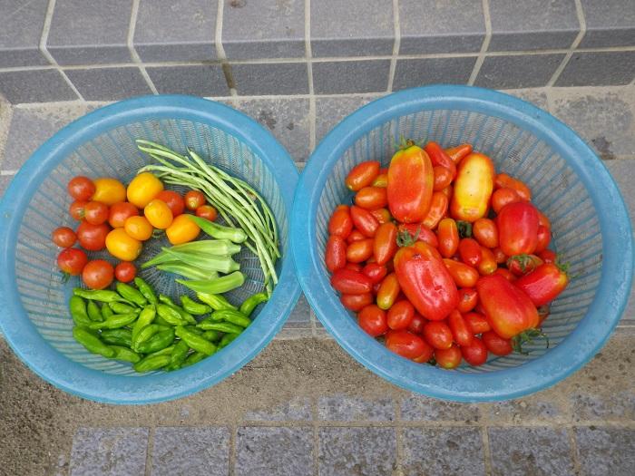 収穫1_15_08_14