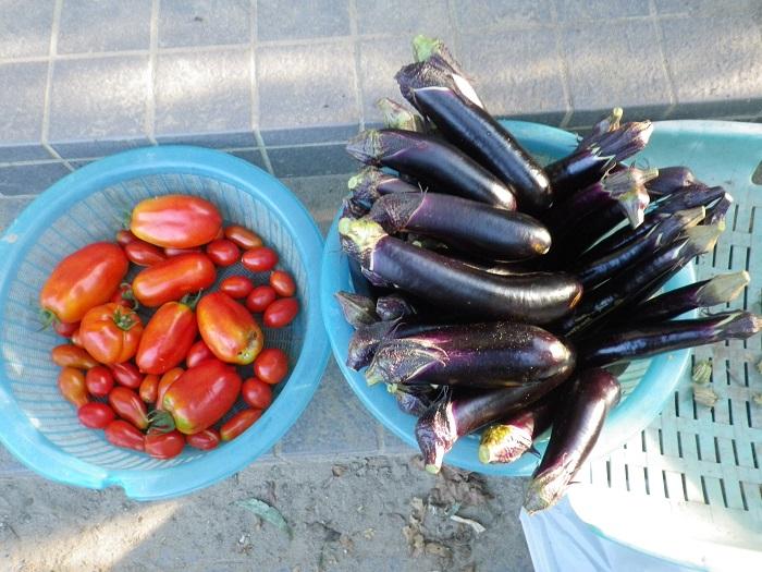 収穫2_15_08_16