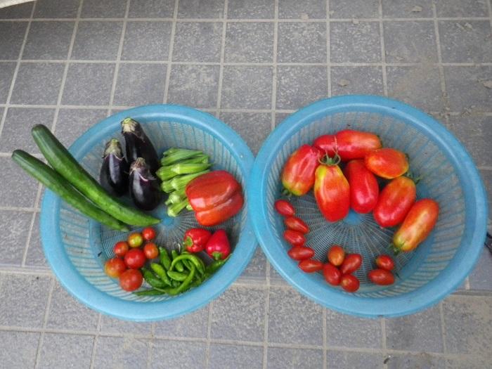収穫1_15_08_19