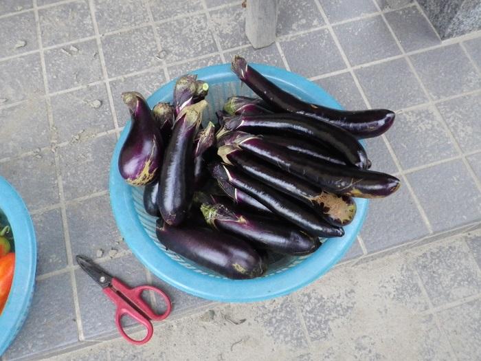 収穫2_15_08_19