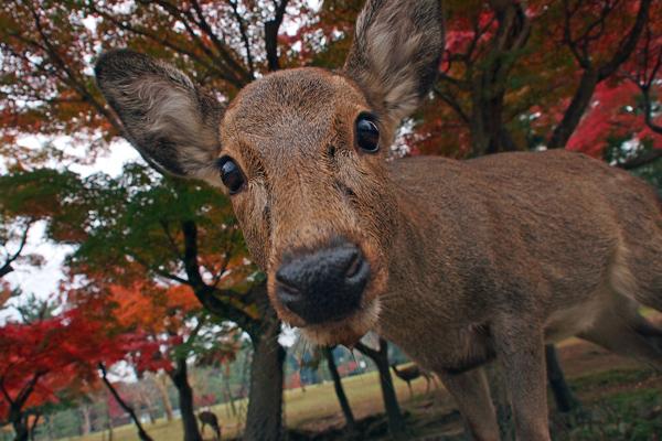 111128a奈良公園