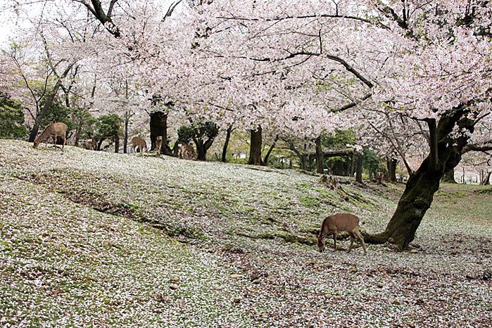 120416奈良公園