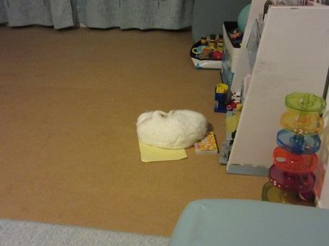クレヨンセットの上で寝るふきちゃん1