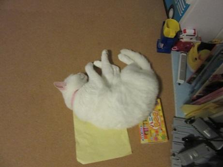 クレヨンセットの上で寝るふきちゃん3