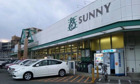 sunny-maimatsubara.jpg