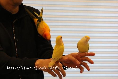 黄色い3羽