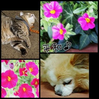 PhotoGrid_1438817490799.jpg