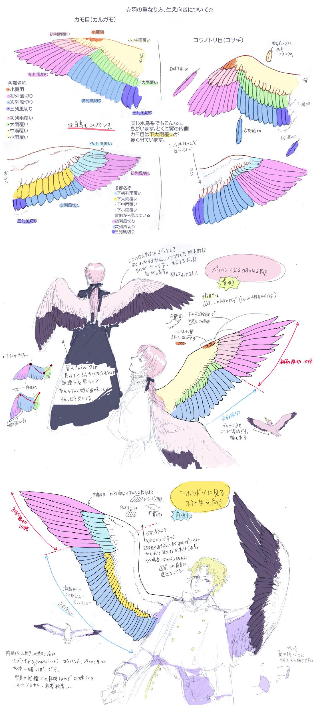 Blog Entry 43 on Bird Anatomy