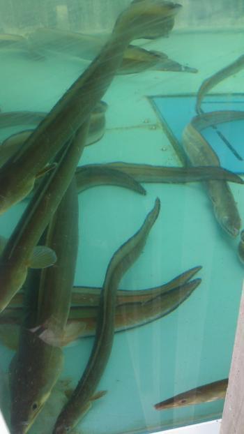 魚150727