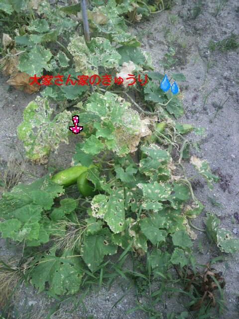 P1001260_20150810060505fb1.jpg