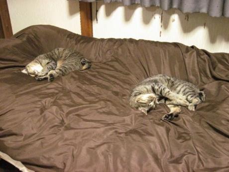 お休み姉妹