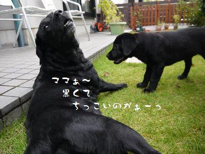 P1090616 20150819 サリーちゃん1