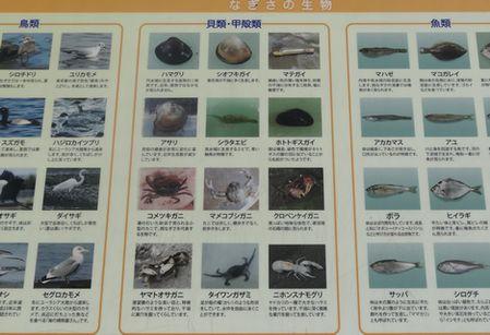 水質浄化に貝も大きな役割