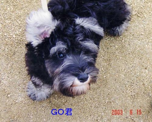 GO2003年6月15日1
